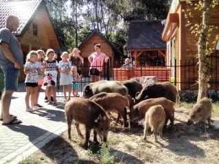 ZIELONY ZAKĄTEK Dziwnów Codzienna wizyta mieszkających w pobliskim lesie przyjaznych dzików
