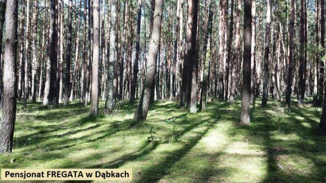 Pokoje FREGATA Dąbki Nadmorski las