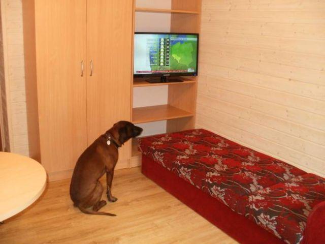 Domki Letniskowe BLISKO MORZA - 100m od plaży Międzywodzie Domek piętrowy -pokój z telewizorem.